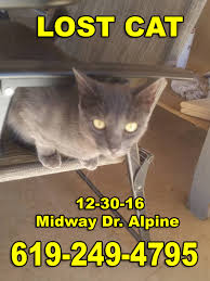 Missing Cat Meme - 12 30 16 lost cat female grey cat midway dr alpine 619 249 4795 copy