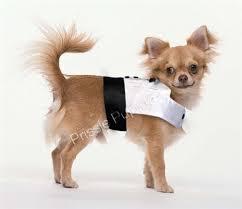 black tie event dog tuxedo apparel weddings posh puppy boutique