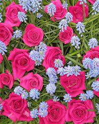 Cut Flower Garden by Your Best Flower Gardens Martha Stewart