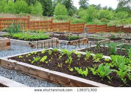 vegetable garden stock images royalty free images u0026 vectors