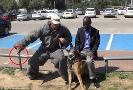 belgian malinois jet black video footage shows belgian malinois dog from israel stop knife