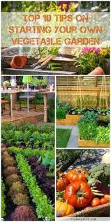 vegetable garden layout for small spaces what will grow