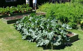 Home Vegetable Gardens by Vegetable Gardens In Unexpected Places Ramblings From A Desert