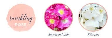 types of roses a visual compendium ftd com