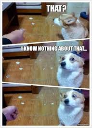 Dog Jokes Meme - guilty looking dog funny joke pictures
