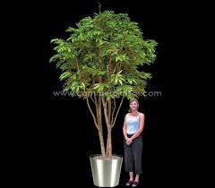 artificial ficus alii tree silk alii trees 10