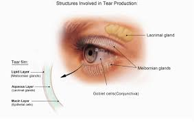facts about dry eye national eye institute