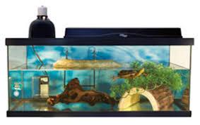 aquatic marketplace feng shui fish decor pet product news may