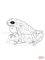 strawberry poison dart frog coloring page free printable
