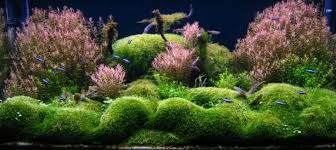 Aquascaping World Aquascaping World Competition Gallery