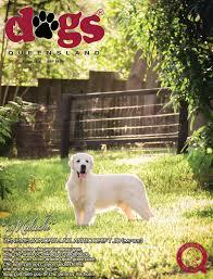 australian shepherd queensland dogs queensland the queensland dog world issue 7 july 2016