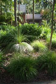 native plant solutions best 25 native gardens ideas on pinterest australian garden