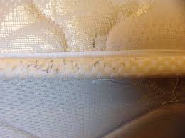 can you see bed bugs with a black light how to see if hotel has bed bugs bed bedding and bedroom