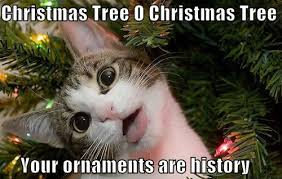 Tree Meme - cats vs christmas trees weknowmemes
