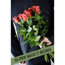 Roses For Sale Rose Delivery Send Rose Buy Rose Order Rose Rose For Sale
