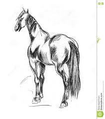 beautiful pencil drawings of horse great drawing