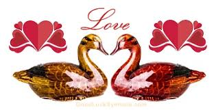 wedding wishes in mandarin mandarin ducks a symbol of and marriage