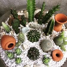 47 diy cacti and succulents garden inspiration wartaku net