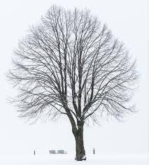 1684 winter tree amazing vermont photography
