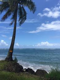 Beach House Kauai Restaurant by Hawaii Evergreen U0026 Free