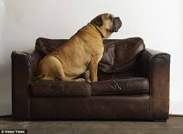 my sofa my doesn t match my sofa animal charities reveal most