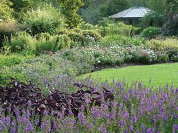 texas native plants landscaping houston u0027s 5 best public gardens houstonia