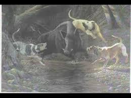 american pitbull terrier webbed feet catahoula history movie youtube