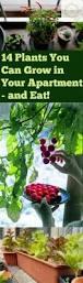 25 beautiful indoor gardening ideas on pinterest water plants