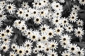 georgetown flowers colorized grady photo