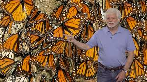 steven reppert umass part 1 neurobiology of monarch butterfly