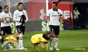 colo colo players escorted out of tunnel by dogs from local animal