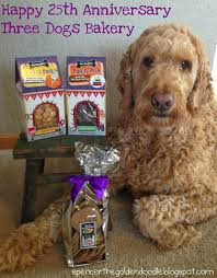 goldendoodle puppy treats 177 best goldendoodle images on puppies breeds