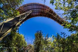 there s a canopy walkway in cape town that lets you walk above the