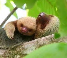 Sloth Meme Maker - sloth meme generate a meme using bad ass sloth crochet