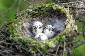 when is removing birds nests okay