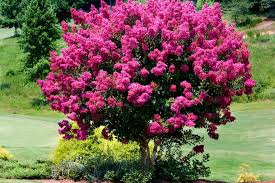 pink flower tree smart plant and tree choices for an allergy friendly garden diy