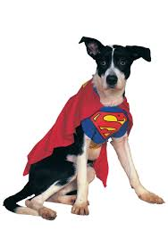 superman pet costume costumes for dogs