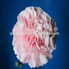 Wholesale Carnations Carnation Cut Flower Prices Carnation Cut Flower Prices Suppliers