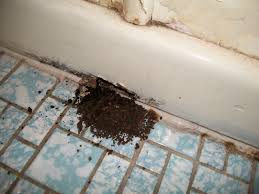 Water Under Bathroom Floor Water Damage To A Home Termite Inspections Newcastle