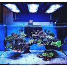 Live Rock Aquascaping Ideas Love The Empty Swimming Area Wish It Was A Bigger Picture