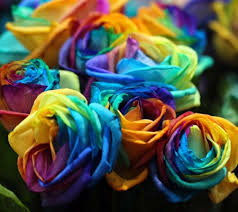 Multicolor Roses Rainbow Roses Flowers U0026 Nature Background Wallpapers On Desktop