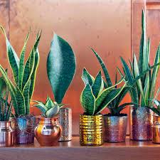 grünpflanzen im schlafzimmer zimmerpflanzen im schlafzimmer sinnvoll oder ungesund mein