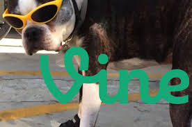 boxer dog vine the 25 most hilarious animal vines set to rap songs