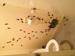 roaches in my bathroom great idea for bathroom vent don t forget spooky halloween