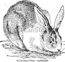 vintage rabbit rabbit vintage engraving rabbit vintage engraved clip