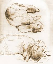 rabbit drawings by beatrix potter art animals drawing etching