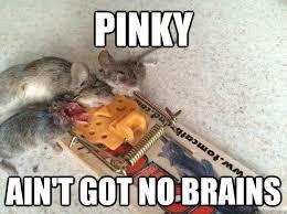 Mouse Memes - 12 adorable mouse memes