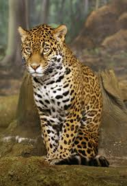 brazil plans to clone endangered animals