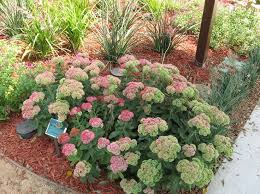 Drought Friendly Landscaping by Best 25 Drought Resistant Plants Ideas On Pinterest Drought