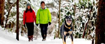 West Virginia how to travel with a dog images 7 hikes that are even better in winter wild wonderful west virginia jpg